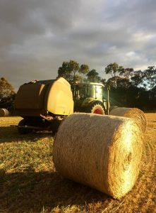 silage-film-adelaide